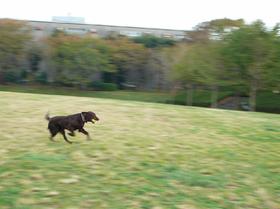 2008.11.17a.jpg